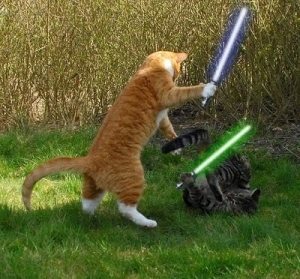 cats with lightsabers